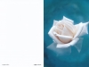 Bestattungsinstitut Rose Trauerdruck, Lugano 403v