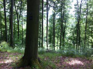 Baumbestattung im Friedwald