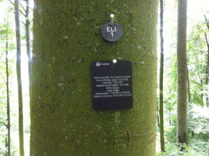 Baumbestattung Friedwald