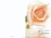 Bestattungsinstitut Rose Trauerdruck, EP193 Rose lachs