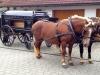 Pferdeleichenwagen in Forst