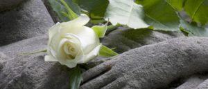 Bestattungsinstitut Rose
